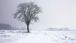 cold-snow-landscape-nature